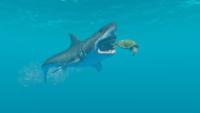 SharkVsTurtle